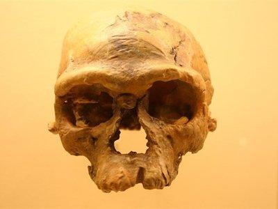 Nuestra especie es mucho más antigua de lo que creíamos (y nació en Marruecos)