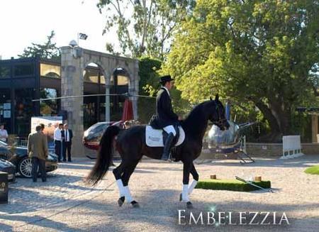 """Arabequus, el concurso Ecaho """"B"""" Internacional y Campeonato de Cataluña de caballo árabe de Girona"""