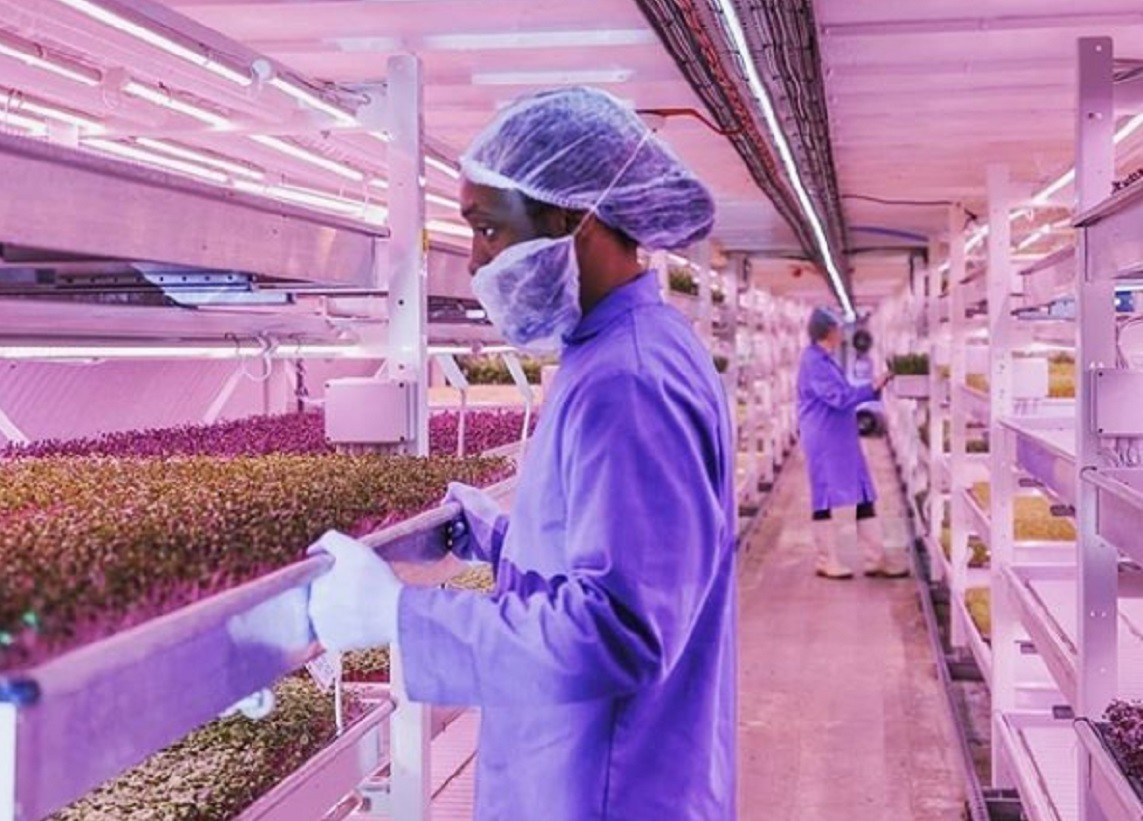 Huertos subterráneos a 33 metros bajo tierra: la última tendencia en agricultura urbana