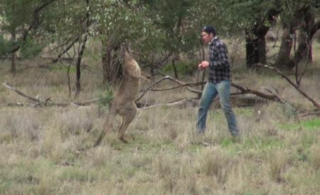 El combate de boxeo definitivo: un canguro y un señor australiano, a puñetazos por un perro