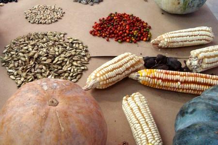 Beneficios de la Dieta de la Milpa: orgánica, sustentable, saludable y preserva la identidad cultural mexicana