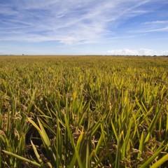 Foto 8 de 14 de la galería la-produccion-de-los-cereales-con-base-de-arroz en Vitónica