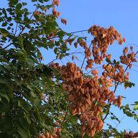 Intención y voluntad: te damos 5 nuevas propuestas de otoño para protegerte, cuidarte y tener buenas sensaciones