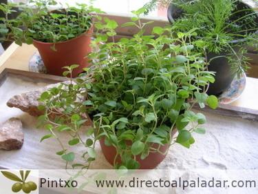 El Orégano, mi hierba aromática preferida
