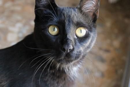 [Inocentada 2015] Meu, análisis: un señor gato de gama alta que no tiene nada que envidiar al resto