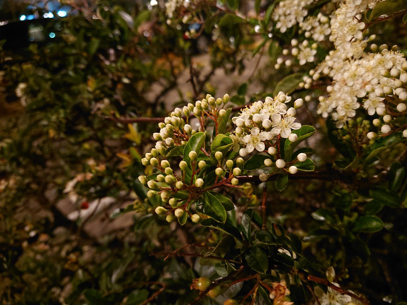 Foto de Sony Xperia XZ2, galería fotográfica (22/32)