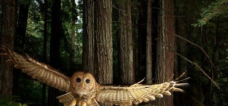 'Wild: Michael Nichols', la mayor exposición sobre uno de los fotógrafos estrella de National Geographic
