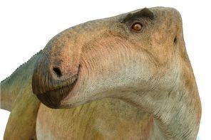 Un fémur y una tibia de dinosaurio aparecen en Burgos