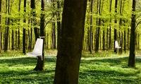 Somnio, sillas que se cuelgan de los árboles