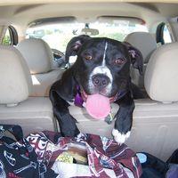 Pet friendly: viajes organizados para gente con perros