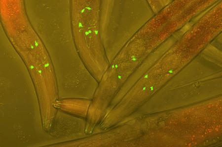 El primer hotel de gusanos del mundo es en realidad un experimento sobre la vejez