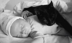 ¿Los gatos provocan alergia a los niños?