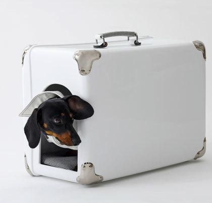 Guau, qué maleta