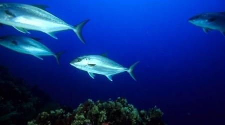 [Vídeo] La lista de la extinción: 400 especies marinas en la linea de partida