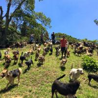 Las 900 razas únicas de perro en un refugio de Costa Rica: más allá del pedigree