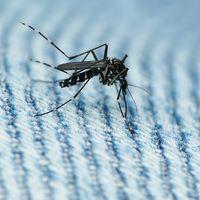 El dengue se ha incrementado en un 250% en México pero el gobierno no ha comprado insecticidas para el mosquito: Animal Político