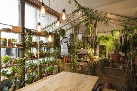 Airbnb Greenery 112