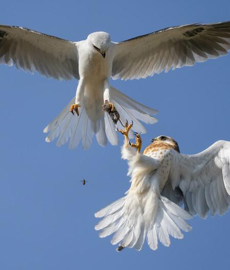 C Jack Zhi Wildlife Photographer Of The