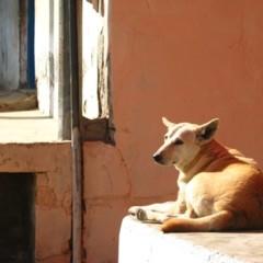 Foto 21 de 39 de la galería caminos-de-la-india-falen en Diario del Viajero
