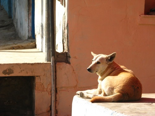 Foto de Caminos de la India: Falen (21/39)