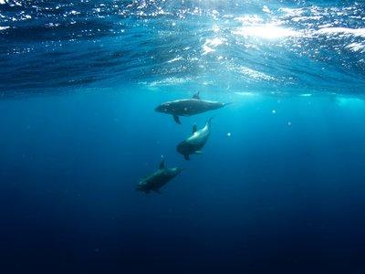 """""""No bebas agua marina"""": así es como la mayoría de mamíferos marinos consiguen sobrevivir a la deshidratación en mitad del mar"""