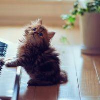 Haz la prueba: si esta música te gusta es que eres en realidad un gato