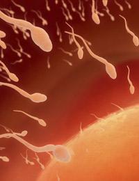 Estudio sobre la fertilidad en nuestro país