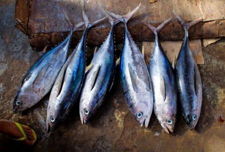 Ventajas Dieta A Base De Pescado Trendencias Hombre
