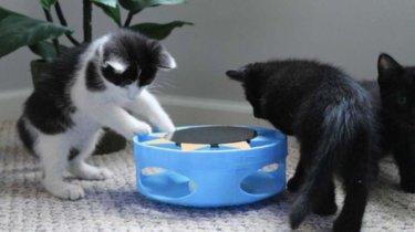 IrresistiCat: un juguete para tu gato que funciona con energía solar