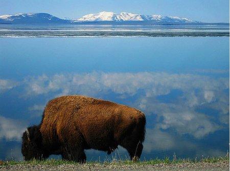 Este verano podemos acampar en Yellowstone sin problema