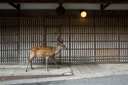 Planet Deer Yoko Ishii 14