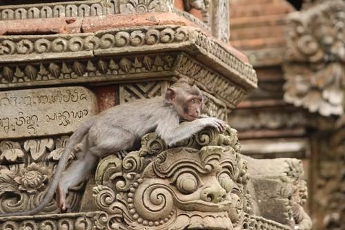 El Templo sagrado de los monos de Ubud en Bali