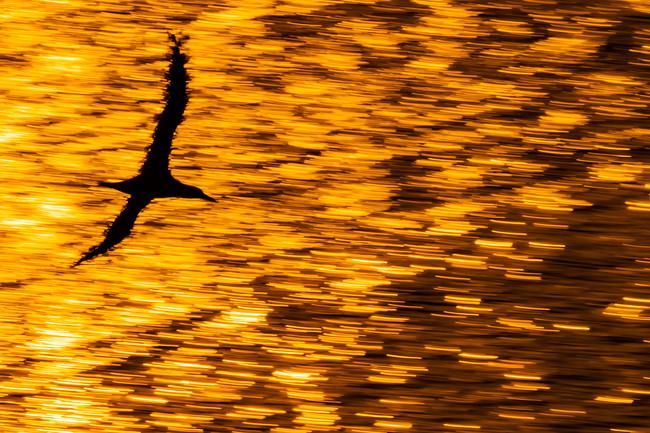 """""""Siempre intento buscar un componente artístico en mis encuentros con las aves"""", Mario Suárez, fotógrafo de naturaleza"""