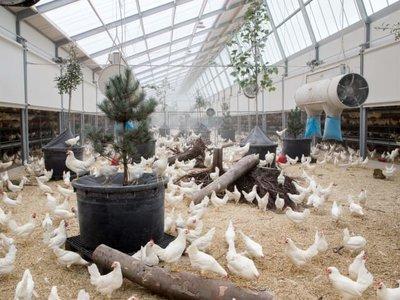 """Esta """"granja revolucionaria"""" holandesa produce el primer huevo sin emisión de CO2 del mundo"""