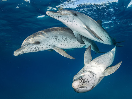Mirrorless Wide Angle Eugene Kitsios Atlantic Spotted Dolphins