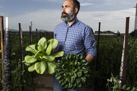 Dos De Las Especies Que Cultiva El Pakchoi Izq Y El Tatsoi Dcha