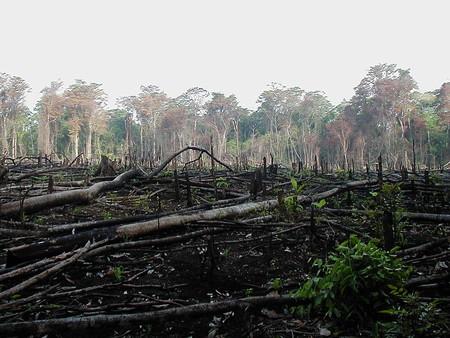 Colombia perdió 178.597 hectáreas de bosque en 2016, un área más grande que Bogotá