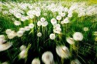 Reflexoterapia para combatir la astenia primaveral