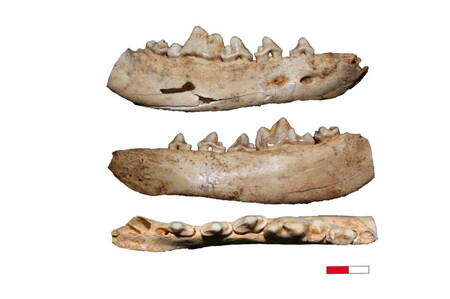 Canidae Fossilien 960x638