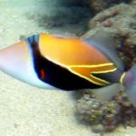 Los peces de arrecife son capaces de ver colores que los humanos no perciben