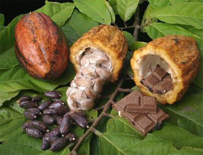 Virtudes del cacao