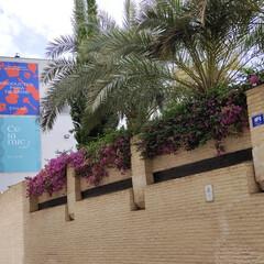 Foto 12 de 38 de la galería vivo-x60-5g-galeria-de-fotografias en Xataka