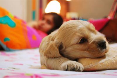 ¿Se pueden entrenar perros para ayudar en caso de hipoglucemia?