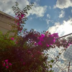 Foto 2 de 14 de la galería fotografias-con-sony-xperia-t3 en Xataka México