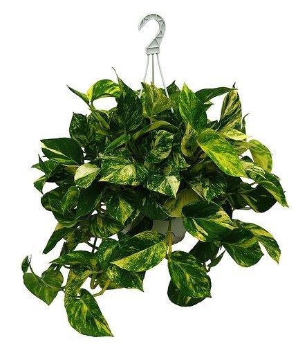 Ambientador casero bueno, oloroso y barato