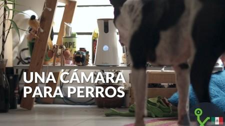 Furbo: el mejor amigo que puede tener nuestro perro mientras no estamos, lo probamos en video