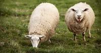 Cambiar la dieta del ganado para combatir el Cambio Climático