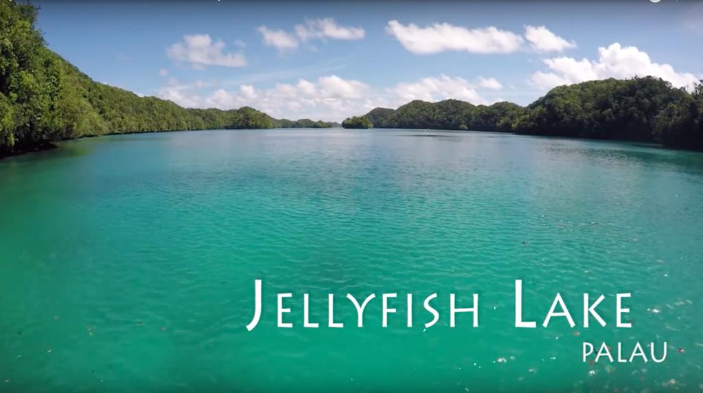 El hipnótico vídeo del baño en el lago de las Medusas