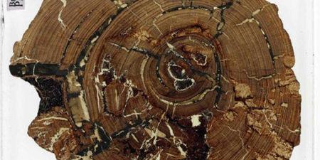 Encuentran fósiles de Darwin olvidados en un cajón