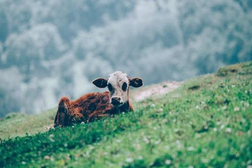 El veganismo es la mejor forma de salvar al planeta